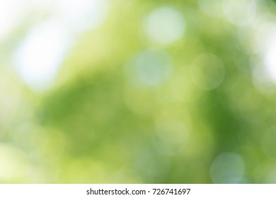 Abstract green bokeh background from trees in the park
