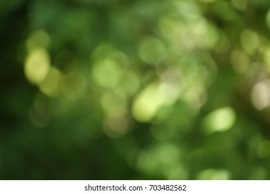 abstract green bokeh circles background. image is blurred.