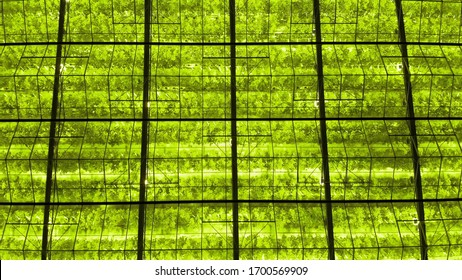 abstract green geometric background. Illuminated greenhouses at night.Glass rooftop agricultural infrastructure of Poland. Aerial