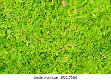Abstract green grass background, nature texture green concept.
