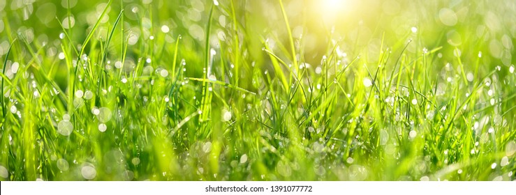 Abstract green grass nature landscape in summer sun with bokeh. Juicy green grass on meadow with drops dew in morning light in outdoors close up. Beautiful artistic image of purity freshness nature