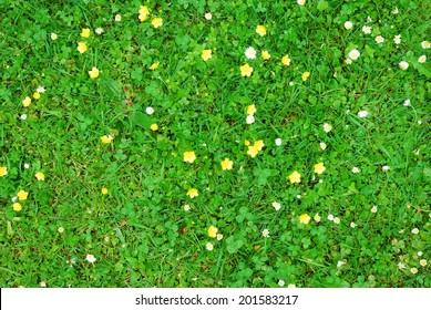 Abstract green grass texture with white and yellow flowers