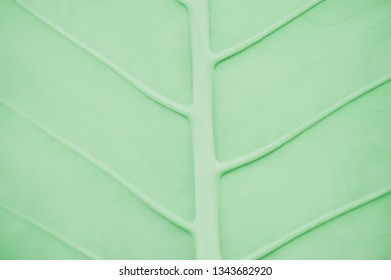 abstract  green leaf texture background for design