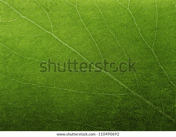 Abstract Green Leaf Texture Background Stock Photo Edit Now