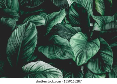 abstract green leaf texture, nature background, tropical leaf - Shutterstock ID 1359165287