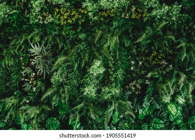 abstract green leaf texture, tropical leaf foliage nature dark green background