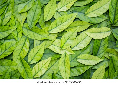 abstract green leaves background. leaves pattern