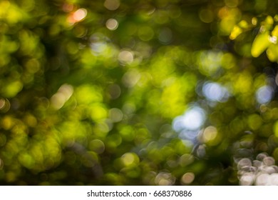 Abstract green leaves light spot background