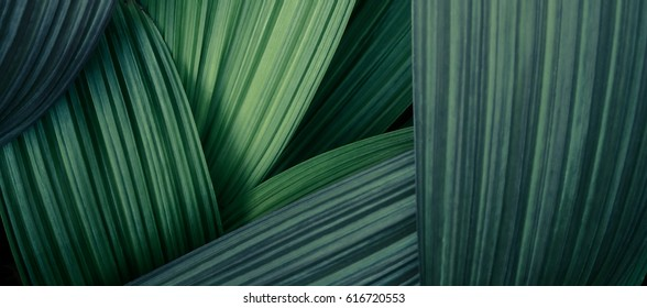 Abstract green leaves line texture with light