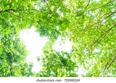 abstract green mangrove leaf forest in day time - can use to display or montage on product