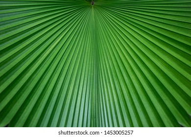 Abstract of green palm leaf for background