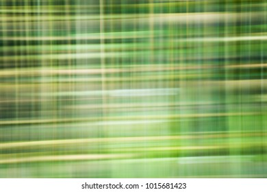 Abstract green pattern of tree trunks
