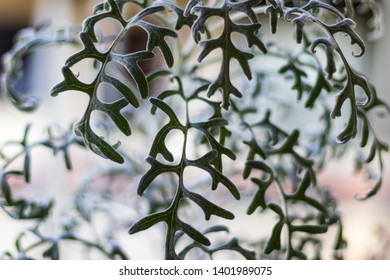 Abstract green plant with white in daylight