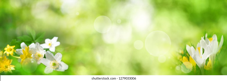 Abstract green spring background with flowers and bright bokeh