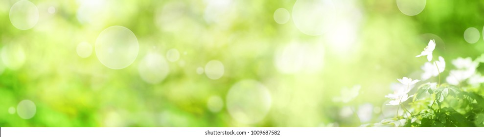 Abstract green spring panorama with small white flowers and bokeh effects for a easter decoration