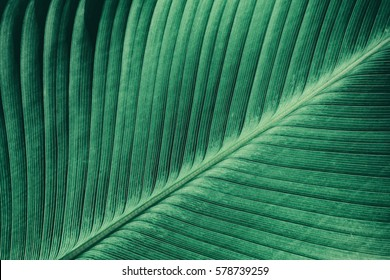 abstract green striped nature background, vintage tone