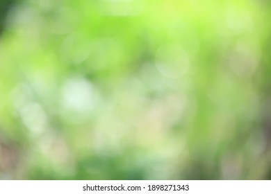 abstract green summer bokeh background, gradient view art texture glow