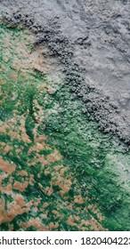Abstract Green and Tan Natural Spring with Dark Gray Rocks