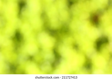 Abstract green-yellow blured background