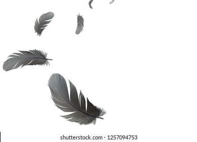 Abstract grey feathers flying in the air. isolated on white background.