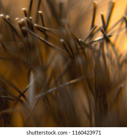 Abstract hair close up