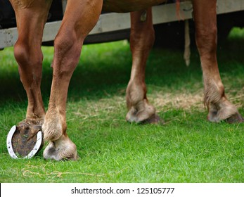 An abstract of a horse resting a hind leg.