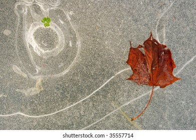 abstract ice background with red maple leaf and little green leaf