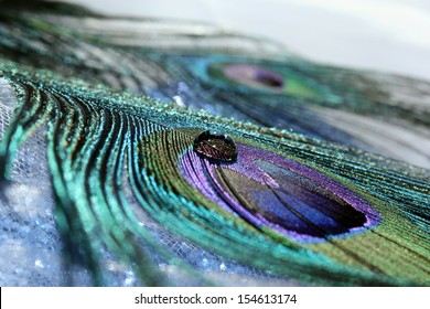 An abstract image of beautiful peacock feathers