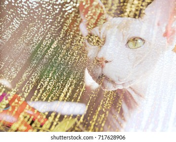 The abstract image of the cat of the Canadian Sphinx breed.