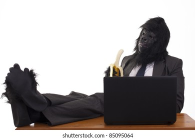 Abstract image of a gorilla in business attire sat infront of a computer with his feet on the desk eating a banana. White background.