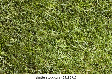 Abstract image of grass texture for background