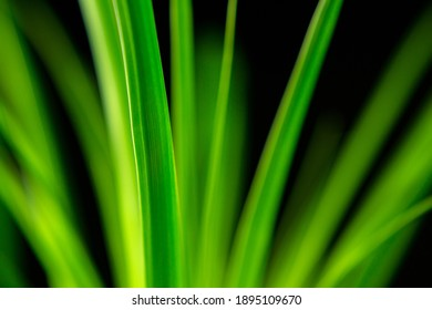 abstract image with green leaves in the back light