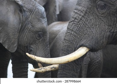 An abstract image of a herd of elephants close up.