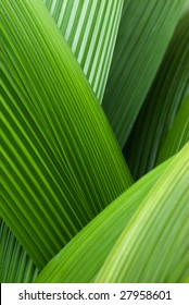 An abstract image of palm leafs
