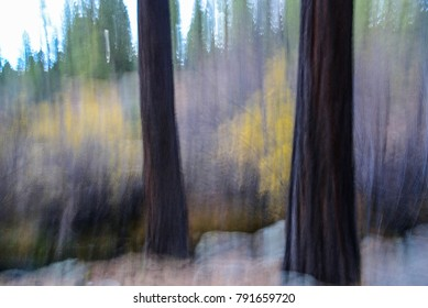 """Abstract image of ponderosa trees and winter willows against gray sky.  Image is created by using slow shutter speed and vertical camera movement during exposure.  Image is a """"Impression of Nature."""""""