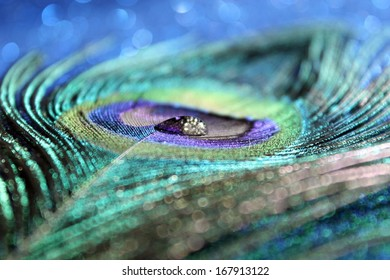 An abstract image of a sparkling water drop on a vibrant peacock feather
