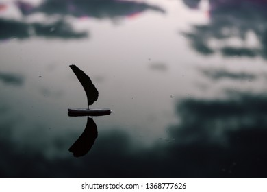 abstract image, toy sailboat made of wood leaf on a water at sunset, it can use for theme of human mood, ecology concept and other