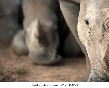 An abstract image of two white rhino.