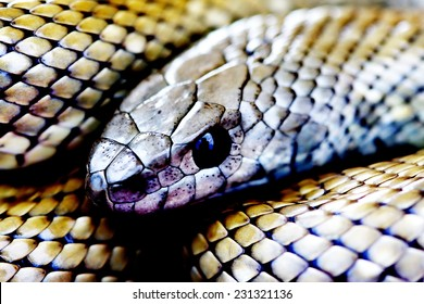 An abstract image of a venomous tree snake from South Africa