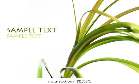 abstract image of young green leaves against white background and plenty of space for text