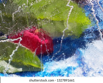 Abstract Images of Flower Blossoms  behind an Ice Plate