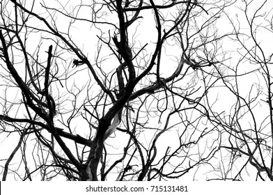 Abstract isolate black and white of dried tree