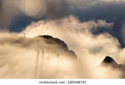 Abstract landscape with fog in the forest on the mountains