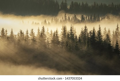 Abstract landscape with fog in the forest on a morning day in the mountains