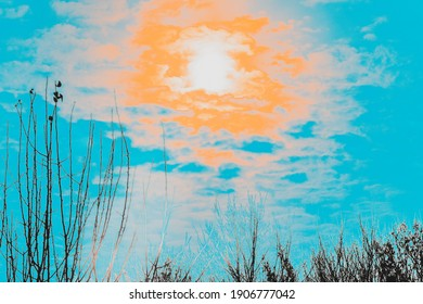 Abstract landscape with outlines of trees, and the sun - a scarlet ball. Shooting against the sun, selective focus, white balance shift.