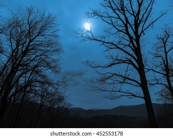 Abstract landscape. Twilight in the mountain forest. Trees against the night cloudy sky.