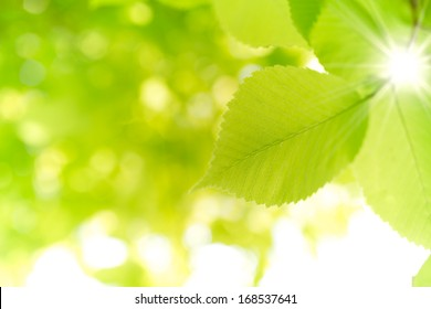 Abstract Leaf Background 1