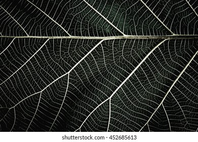 Abstract leaf background. Close up of detail on leaf texture background