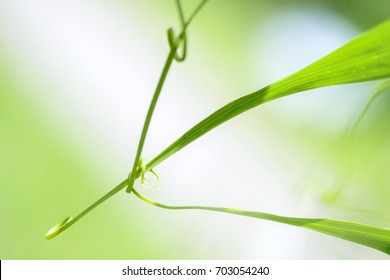 Abstract leaf  spiral close-up  in a blurred background