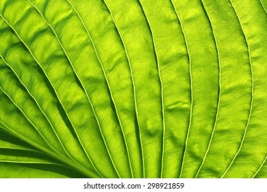 abstract leaf texture.